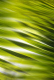 Abstract Forest Background. Backlit jungle palm leaves as an abstract background; Jpeg File Stock Images