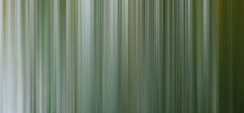 Abstract forest background Stock Photos