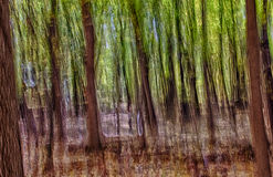 Abstract Forest Background. Abstract image of early autumn woods in vertical greens and browns with hints of sky blue Stock Images