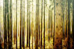 Abstract forest background Royalty Free Stock Images