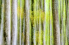 Abstract forest Stock Images