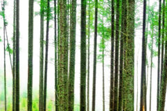Abstract Forest Blur Background Royalty Free Stock Image