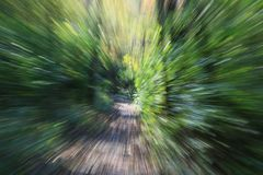 Abstract Forest Colors. Created using lens zoom stock photos