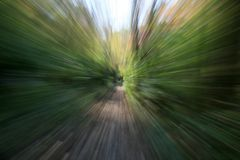 Abstract Forest Colors. Created using lens zoom royalty free stock photo