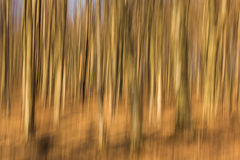Abstract forest with long exposer, beautiful colorful background Royalty Free Stock Photography