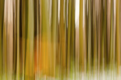 Abstract forest with long exposer, beautiful colorful background Stock Images