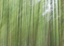 Abstract forest. Forest in motion Royalty Free Stock Photography