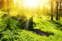 Abstract forest scene with sun Stock Image