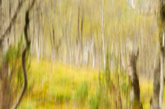 Abstract forest scenery 4 Royalty Free Stock Photos