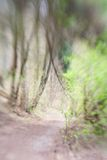 Abstract forest with small green sprout and footpath. In spring Stock Image