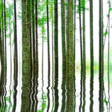 Abstract Forest with water Stock Photo