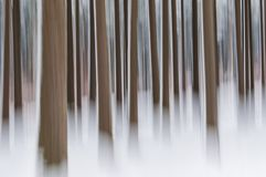 Abstract forest in winter Royalty Free Stock Images