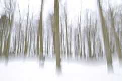 Abstract forest in wintertime Stock Photo