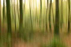 Abstract forestry blurred background. An abstract forestry blurred trees background Stock Photography