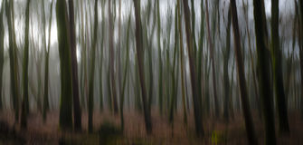Abstract forestry blurred trees background Stock Image