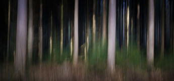 Abstract forestry blurred trees background Royalty Free Stock Photography