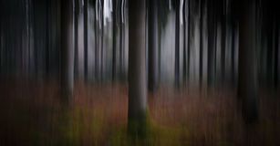 Abstract forestry blurred trees background Royalty Free Stock Photos