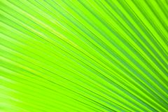 Abstract form of a young palm leave Stock Image