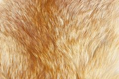 Abstract of fox fur as background Stock Photo