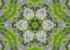 Abstract fractal background  - green leaves Royalty Free Stock Image