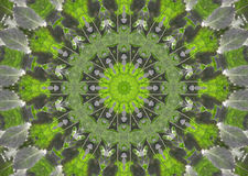 Abstract fractal background  - green leaves Royalty Free Stock Photos