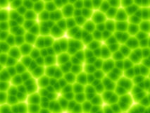 Green plant cells abstract background. Abstract background with many green plant cells with nuclei under the microscope Stock Photography