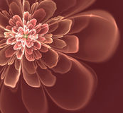 Abstract fractal  flower Stock Photo