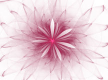 Abstract fractal flower Royalty Free Stock Images