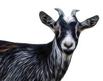 Abstract fractal  Portrait of black goat. On a white background royalty free stock images