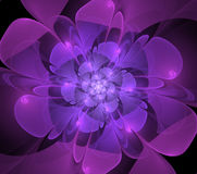 Abstract fractal purple flower Stock Photo