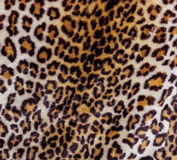 Abstract fragment of view of jaguar fur background Royalty Free Stock Photography