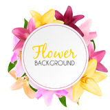 Abstract Frame with Lily Flower. Natural Background. Vector Illu Royalty Free Stock Photos