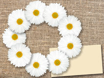 Abstract frame met witte bloemen Royalty-vrije Stock Afbeeldingen