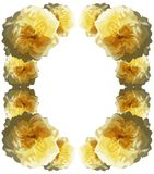 Abstract frame with roses isolated Royalty Free Stock Photo