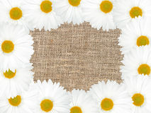 Abstract frame with white flowers Royalty Free Stock Image