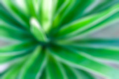 Abstract fresh green  beautiful blur background Stock Image
