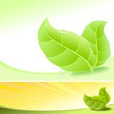 Abstract Fresh Green Leaves and Dew Drops - Vector. Tender Leaves and dew drop Stock Photography
