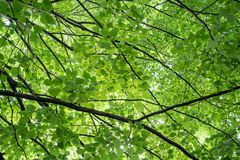 Abstract fresh green nature background of fresh green leaves and dark stems. royalty free stock photos