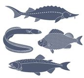 Abstract Freshwater Fish. Vector illustration EPS Royalty Free Stock Image