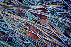 Abstract frozen grass Stock Image