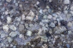 Abstract frozen stones under an ice sheet Royalty Free Stock Images