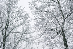 Abstract frozen tree branches. Winter background Royalty Free Stock Photos