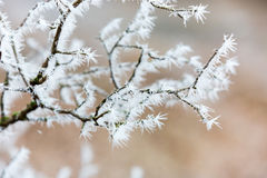 Abstract frozen twig Stock Images