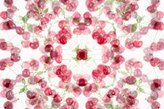 Abstract fruity background with a cherry on a white background. Stock Photography