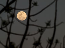Abstract full moon background blur. Stock Photography