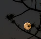 Abstract full moon background blur. Stock Photo