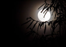 Abstract full moon background blur. Stock Images