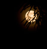 Abstract full moon background blur. Stock Image