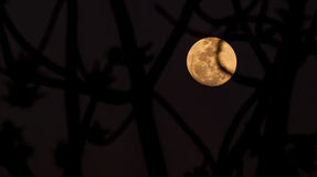 Abstract full moon background blur. Royalty Free Stock Photography
