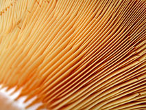 Abstract fungus closeup, season details, Stock Photos